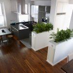 Modern kitchen design with plants