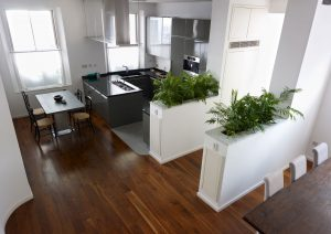 Modern kitchen design with plants